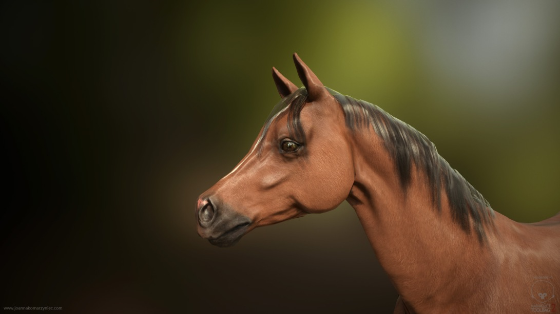 ArabianHorse_closeup